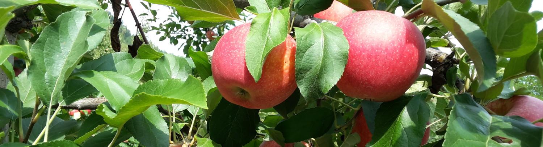 La Valle Della Frutta